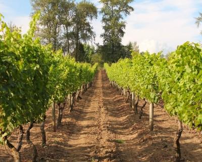 Domaine de Chaberton Winery